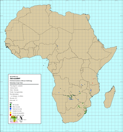 Pseudagrion coeleste Catshead Sprite Africa Distribution Map Feb 2021